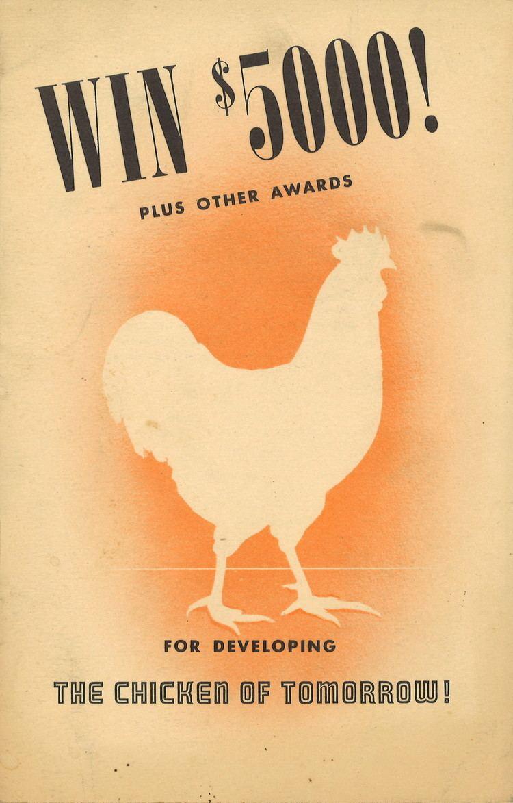 The Chicken of Tomorrow The Chicken of Tomorrow 1948 Mankinds Quest For A Better Hen