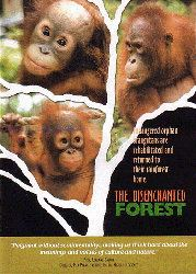 The Disenchanted Forest movie poster