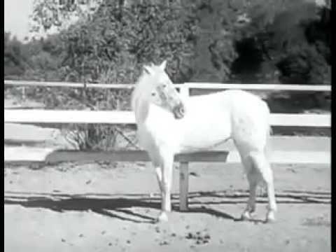The Fighting Stallion The Fighting Stallion 1950 YouTube