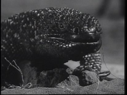 The Giant Gila Monster The Giant Gila Monster 1959 Full Movie Review