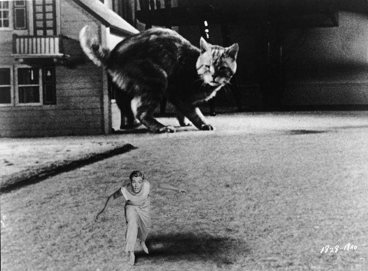 The Incredible Shrinking Man 1957 The Incredible Shrinking Man Film 1950s The Red List