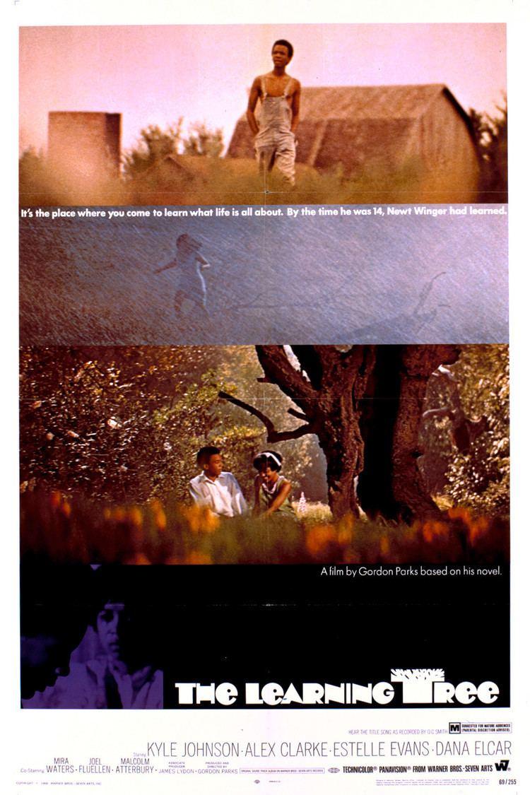 The Learning Tree wwwgstaticcomtvthumbmovieposters64p64pv8