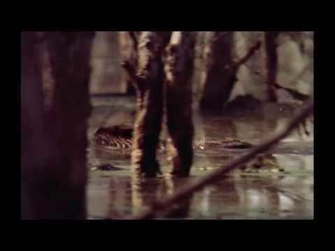 The Legend of Boggy Creek The Legend of Boggy Creek 1972 Trailer YouTube