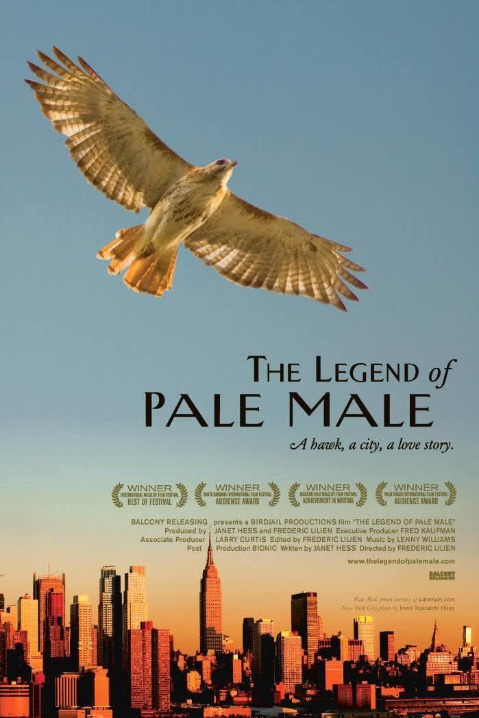 The Legend of Pale Male t3gstaticcomimagesqtbnANd9GcQ5e9f0JycXWKxfRj