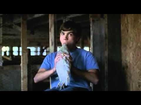 The Mudge Boy mudge boy chicken head suck YouTube