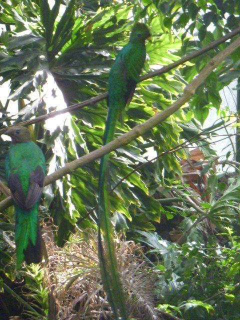 The Nest (aviary)