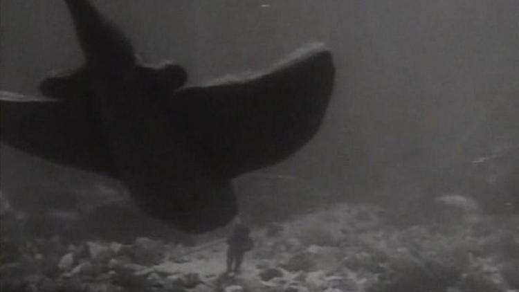 The Sea Bat The Sea Bat 1930 MUBI