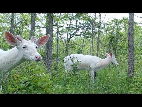 The Territory of White Deer WN the territory of white deer