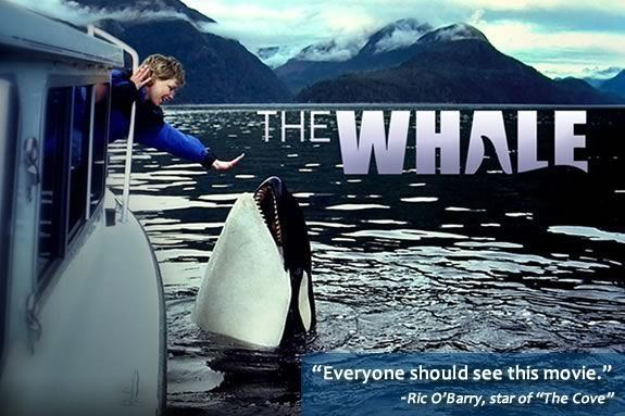 The Whale (2011 film) The Whale 2011 downloadfreemoviess