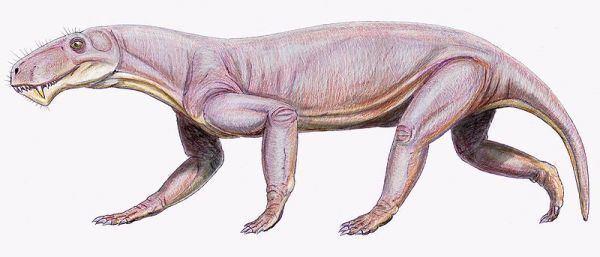 Therapsid palaeoscomvertebratestherapsidaimagesLycaenop
