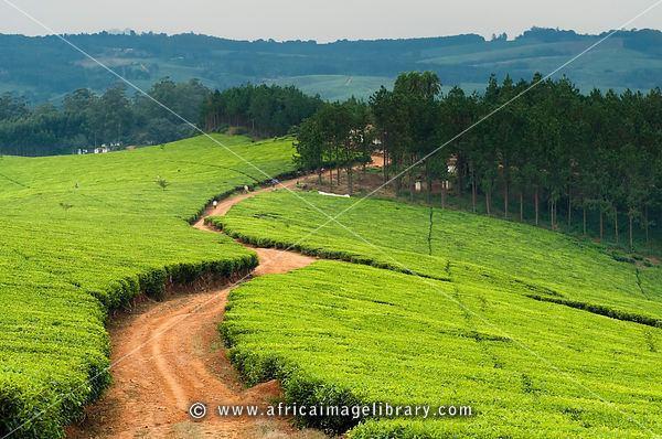Thyolo Beautiful Landscapes of Thyolo