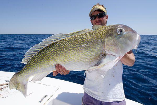 Tilefish Monster Grouper and Tilefish of the Mid Atlantic Salt Water Sportsman