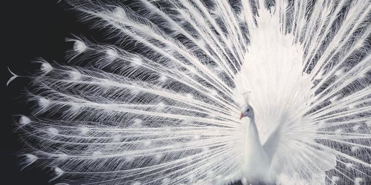 Tim Flach More Than Human photo gallery by Tim Flach Discover Wildlife