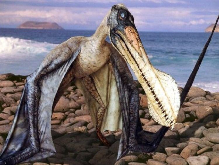 tropeognathus-4379220b-a858-40d0-99f4-206631602c9-resize-750.jpeg