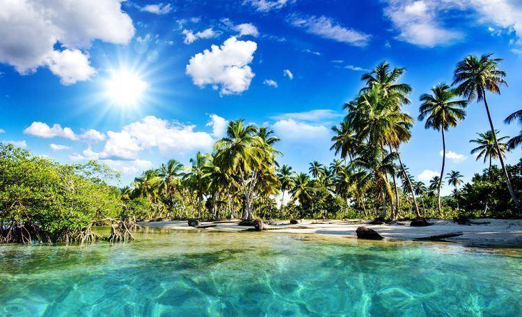 Tropics 78 images about Mood Board 6 Tropics on Pinterest Nature
