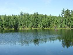Trout Bog Lake (Vilas County, Wisconsin) httpsuploadwikimediaorgwikipediacommonsthu