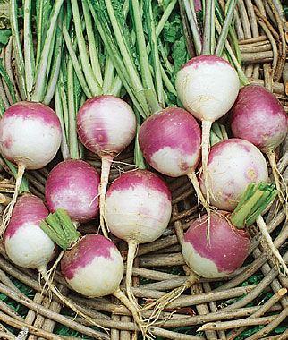 Turnip Turnip Seeds Vegetable Seeds at Burpeecom