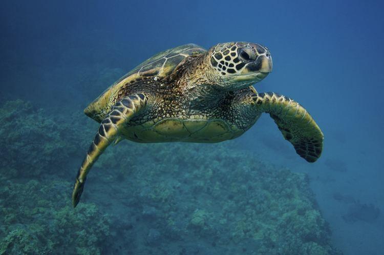 Turtle SEE Turtles
