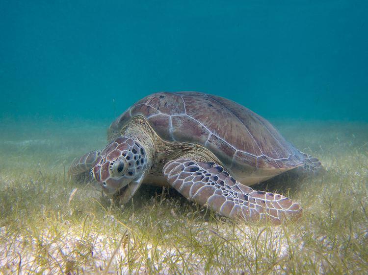 Turtle httpsuploadwikimediaorgwikipediacommonsdd