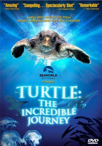Turtle: The Incredible Journey Amazoncom Turtle The Incredible Journey Miranda Richardson Nick