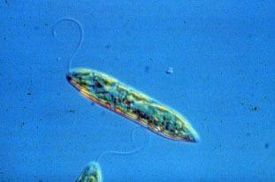 Unicellular organism 9Sc4Cells 6 Unicellular and multicellular organisms
