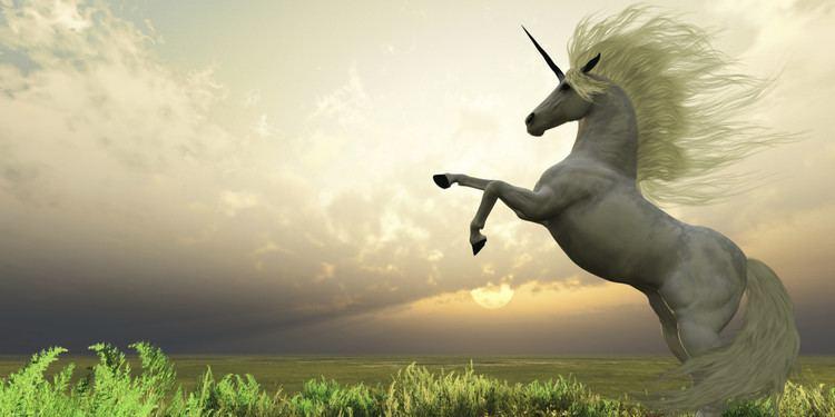 Unicorn In Search of the Unicorn The Huffington Post