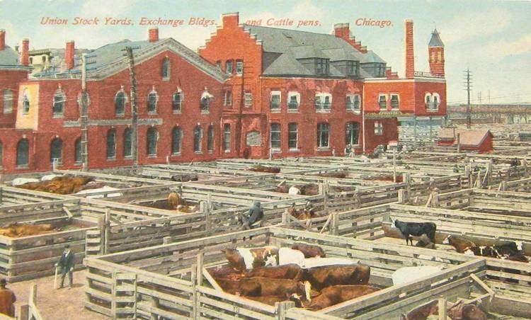 Union Stock Yards postcardchicagounionstockyardsexchangebuildingsandcattle