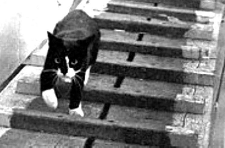Unsinkable Sam Meet the Famous Cat Unsinkable Sam