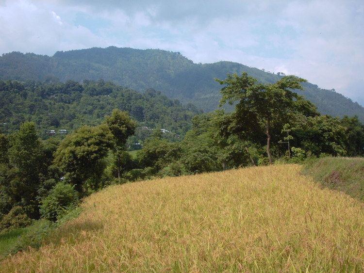 Upland rice httpsuploadwikimediaorgwikipediacommons00