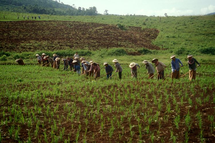 Upland rice Monthly articles Rice production systems in Asia