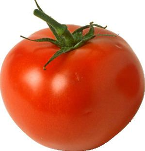 Vegetable Is a tomato a fruit or a vegetable ScienceBobcom