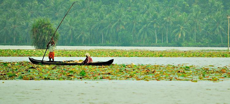 Vellayani Lake httpsuploadwikimediaorgwikipediacommons33