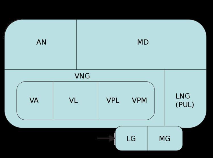 Ventral anterior nucleus