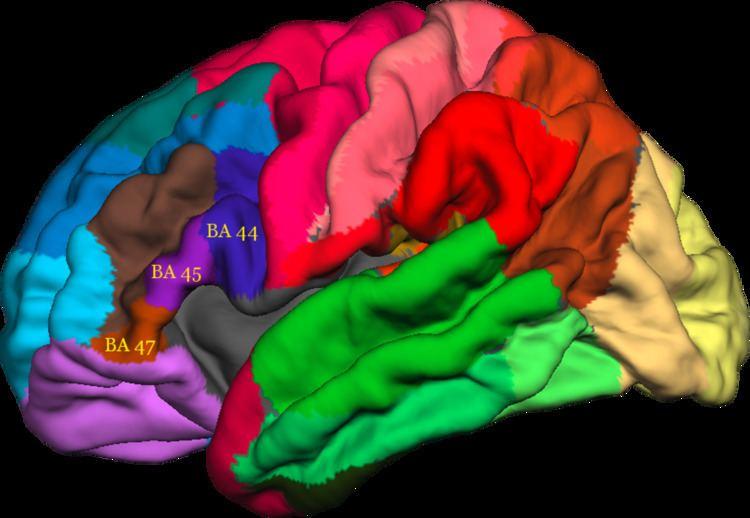 Ventrolateral prefrontal cortex