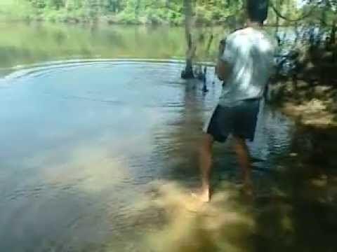 Vermelho River (Araguaia River) httpsiytimgcomvi5eXbryN906ohqdefaultjpg
