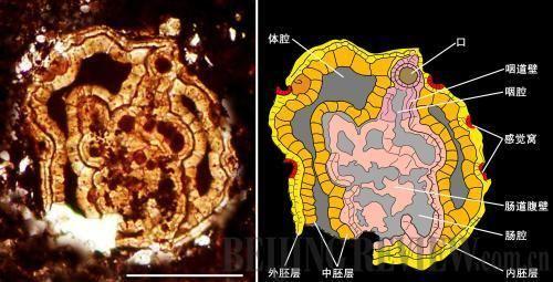 Vernanimalcula Following In Darwin39s Footsteps Beijing Review