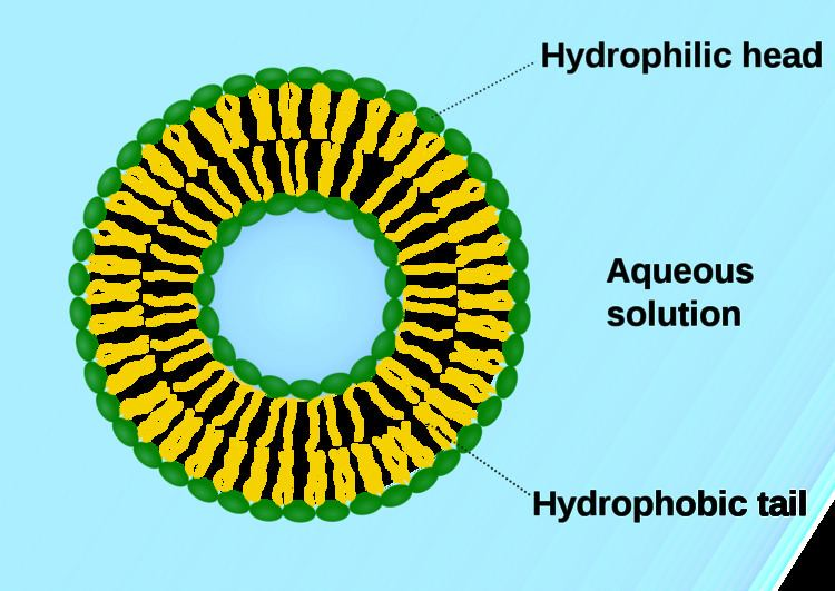Vesicle (biology and chemistry)
