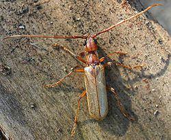 Vesperidae httpsuploadwikimediaorgwikipediacommonsthu