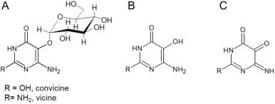 Vicine Determination and stability of divicine and isouramil produced by