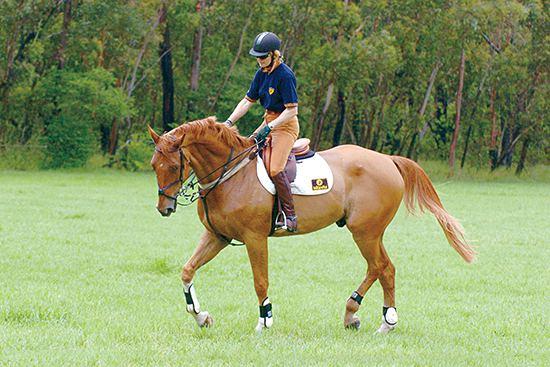 Vicki Roycroft Vicki Roycroft talks about Training Jumpers The Horse Magazine
