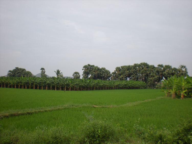 Vikramasingapuram Beautiful Landscapes of Vikramasingapuram