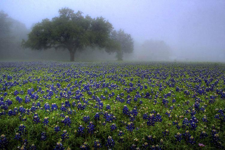 Waco, Texas Beautiful Landscapes of Waco, Texas