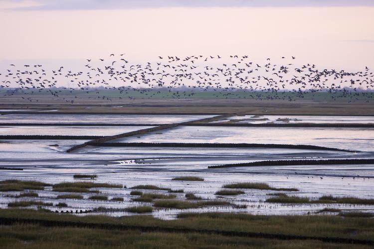 Wadden Sea whcunescoorguploadsthumbssite131400027500