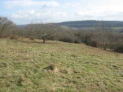 Walton Common httpsuploadwikimediaorgwikipediacommonsthu