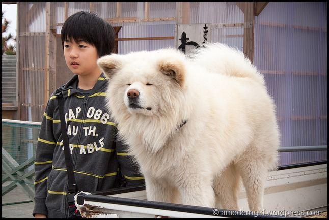Wasao httpsamoderngirlfileswordpresscom201205wa