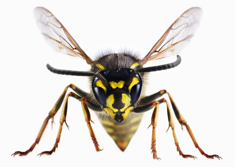 Wasp DRUNK WASPS Just When You Thought They Couldnt Get Worse The