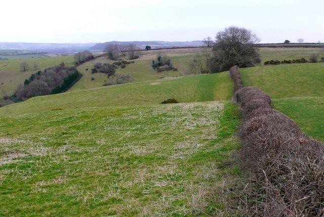 Watts Hill