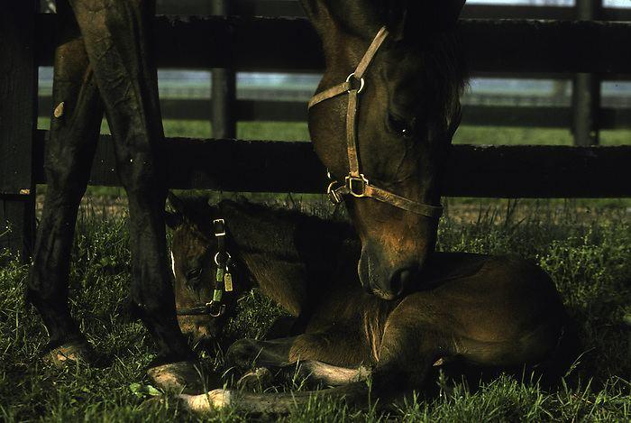 Weekend Surprise horse0116jpg Contact Fine Art