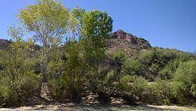 Wegner Peak httpsuploadwikimediaorgwikipediacommonsthu