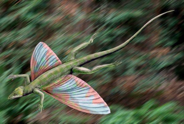 Weigeltisauridae